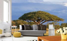 Dimex Fotobehang Acacia Tree MS-5-0097 Boom/Natuur/Landschap