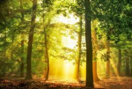 AS Creation AP Digital4 Behang DD109236 Hidden in Plain/Natuur/Botanisch/Bomen Fotobehang