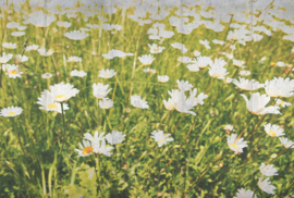 AS Creation AP Digital4 Behang DD108981 Flowers Concrete/Bloemen/Margrieten/Natuur Fotobehang