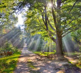 We Live by Light/Holland Sysselt herfstsfeer 5259 - Fotobehang - Noordwand