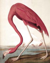 KEK Amsterdam II Fotobehang PA-012 Flamingo/Vogel/Dieren/Natuurlijk