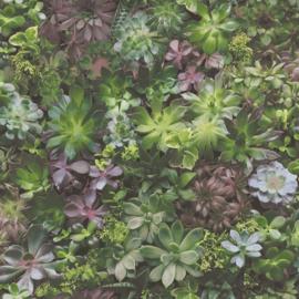 Noordwand Evergreen Behang 7322 Botanisch/Vetplanten/Natuurlijk/Landelijk