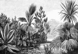 Esta Home Paradise Fotobehang 158953 Jungle Engraving/Botanisch/Tropical/Natuurlijk/Zwart/Wit