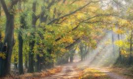 We Live by Light/Holland Boslaantje in de herfst 4783 - Fotobehang - Noordwand