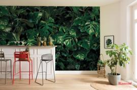 Komar Pure P333-VD4 Tropical Wall/Botanisch/Monstera/Bladeren Fotobehang Noordwand