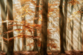 AS Creation AP Digital4 Behang  DD109276 Rays of Grace/Bomen/Bos/Natuur Fotobehang