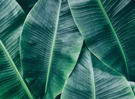 AS Creation Designwalls Fotobehang DD118560 Banana Leaves 1/Bananenblad/Bladeren/Natuurlijk/Modern