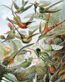 Dutch Wallcoverings Royal Dutch 9 Fotobehang/Kek  PA-023 Exotic Birds/Vogels/Dieren