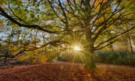 We live by Light/Holland Oude Beukenboom 2032 - Fotobehang - Noordwand