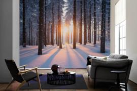 AS Creation Wallpaper XXL3  Fotobehang 470641XL Winter Forest/Natuur/Bos