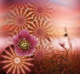 Behangexpresse Circle of Life/Select.D Fotobehang TD4181 Magico/Mandala/Bloemen