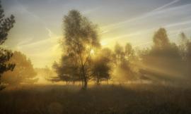 We Live by Light/Holland  Herfstochtend 2 4611 - Fotobehang - Noordwand