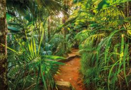Komar Home Imagine Edition 4 Fotobehang 8-989 Jungle Trail/Botanisch/Natuurlijk
