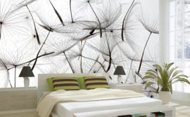 Dimex Fotobehang Dandelion Seeds MS-5-0122 Paardebloem Zaden/Natuur/Modern