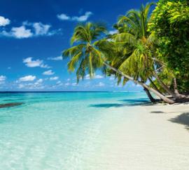 Atwalls/Dimex Fotobehang MS-5-0215 Paradise Beach/Strand/Zee/Palmboom