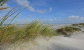 We Live by Light/Holland Schiermonnikoog duinen 2 0487 - Fotobehang - Noordwand