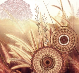 Behangexpresse Circle of Life/Select.D Fotobehang TD4179 Moody/Mandala/Granen/Gras/Natuur