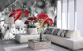 Dimex Fotobehang Red Leaves On Black MS-5-0110 Rode bladeren/Modern/Natuur/Zwart