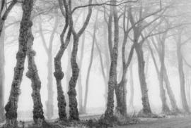 AS Creation AP Digital4 Behang DD109241 Bark/Bomen/Natuur/Grijs/Modern Fotobehang