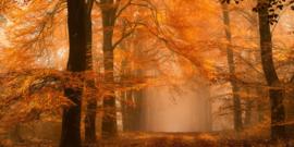 AS Creation AP Digital4 Behang  DD109256 Fantastic Forest/Bomen/Bos/Natuur Behang