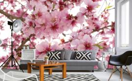 Dimex Fotobehang Apple Blossom MS-5-0108 Appel Bomen/Bloemen/Natuur/Bloesem