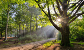 We Live by Light/Holland Beukenboom met bank 9729 - Fotobehang - Noordwand