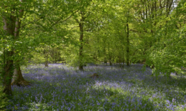We Live by Light/Holland Bos met blauwe lelies 7659 - Fotobehang - Noordwand