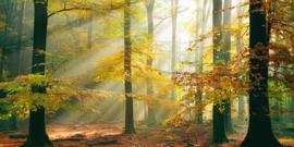 AS Creation AP Digital4 Behang DD109231 Sinfonia Della Foresta/Natuur/Bomen Fotobehang