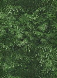 Behangexpresse Instawalls 6374-07 Botanisch/Bladeren/Planten/Natuur/Groen Behang