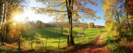 Dimex Meadow Fotobehang MP-2-0066 Panorama/Natuur/Landschap Behang