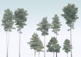 Noordwand Komar Raw Fotobehang R4-040 Pines/Bomen/Palmboom/Botanisch/Natuurlijk