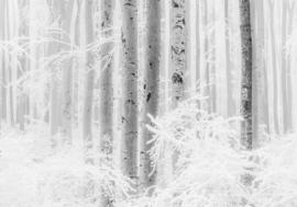 Noordwand Komar Raw Fotobehang R4-043 Winter Wood/Bomen/Botanisch/Natuurlijk
