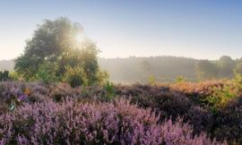 We live by Light/Holland Posbank zonsopgang 1823 - Fotobehang - Noordwand