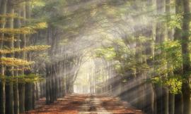 We live by light/Holland  Beukenlaantje in de herfst 4714 Fotobehang  - Noordwand