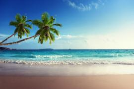 AS Creation Wallpaper 3 XXL Fotobehang 471693XL Tropical Sea 2/Strand/Zee/Palmboom