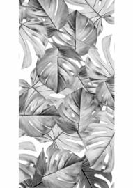 Kek Amsterdam Monstera Black & White 2D Fotobehang WP-583 Bladeren/Botanisch/Wit/Zwart/Grijs