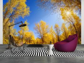 AS Creation Wallpaper XXL3  Fotobehang 470617XL Golden Trees/Natuur/Bos
