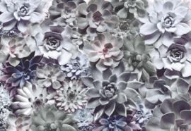 Komar Stories 8-962 Shades/Planten/Botanisch Fotobehang - Noordwand