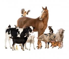 Noordwand Farm Live Fotobehang. 3750059 Farm Animals/Boerderij dieren Behang