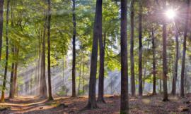 We Live by Light/Holland Sysselt ochtendmist 5209 - Fotobehang - Noordwand