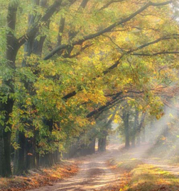 We Live by Light/Holland Boslaantje in de herfst 4783 Fotobehang - Noordwand