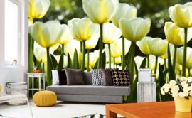 Dimex Fotobehang White Tulips MS-5-0127 Witte Tulpen/Bloemen/Modern