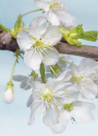 Komar Stories XXL2-033 Blossom/Bomen/Bloemen Fotobehang - Noordwand