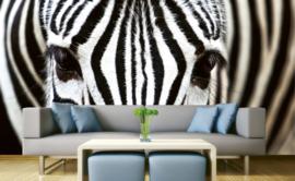 Dimex Fotobehang Zebra MS-5-0234 Dieren/Dieren/Zwart/Wit/Modern