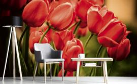 Dimex Fotobehang Red Tulips MS-5-0128 Rode Tulpen/Bloemen/Modern