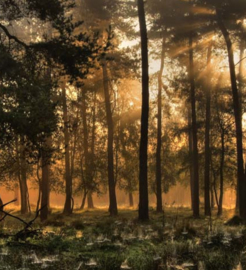 We Live by Light/Holland Herfstochtend 0224 Fotobehang - Noordwand