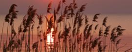 Dimex Fotobehang Reed on the Lake MP-2-0089 Panorama/Riet/Meer/Landschap/Zon
