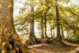 AS Creation AP Digital4 Behang  DD109311 Tree Meeting/Bomen/Bos/Natuur Fotobehang