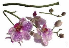 Sticker 17702 Orchidee-Komar