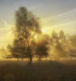 We Live by Light/Holland Herfstochtend 2  4611 Fotobehang - Noordwand